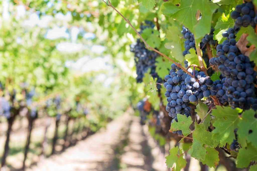 Eden Research grapes day